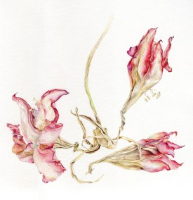 """Alice Kenny, Beauty in Decay 2, Color pencil on paper, 10.125""""x10.5"""", $750"""