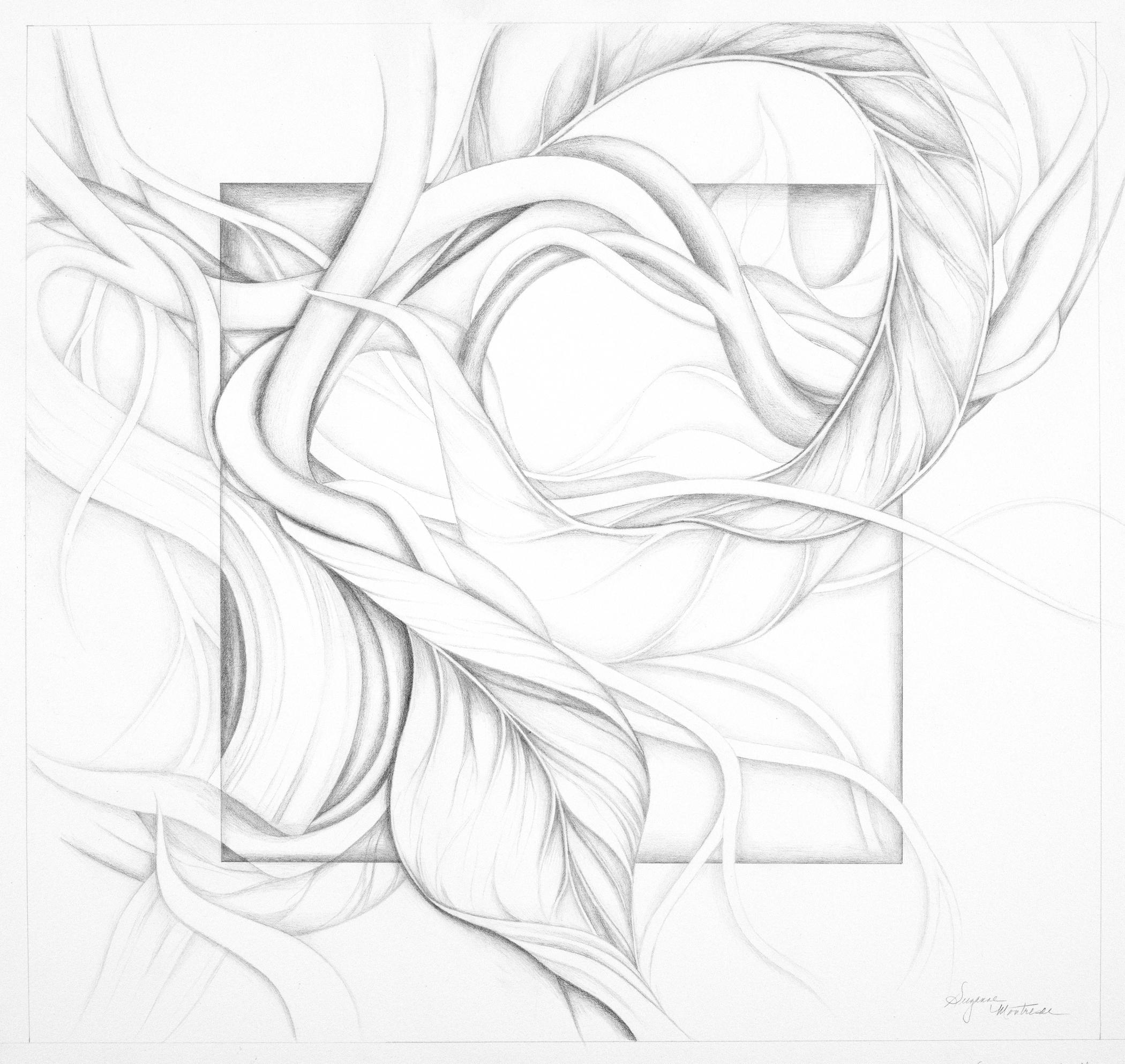 "Suzanne Montresor, Flight II, Graphite on paper, 28""x29"", $900"
