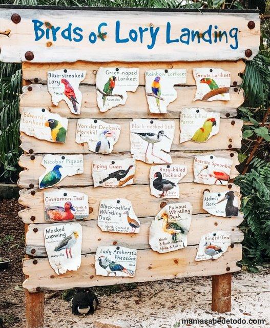 Busch Gardens Birds of Lory Landing De viaje por Florida