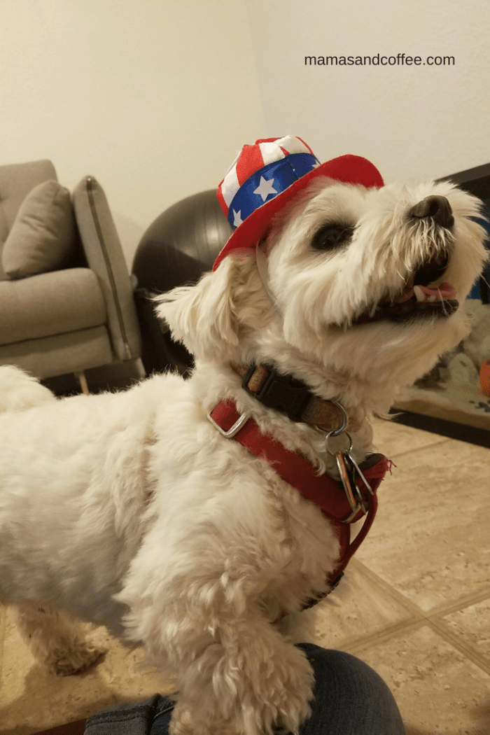 Happy 4th of July. Carlos is ready to celebrate