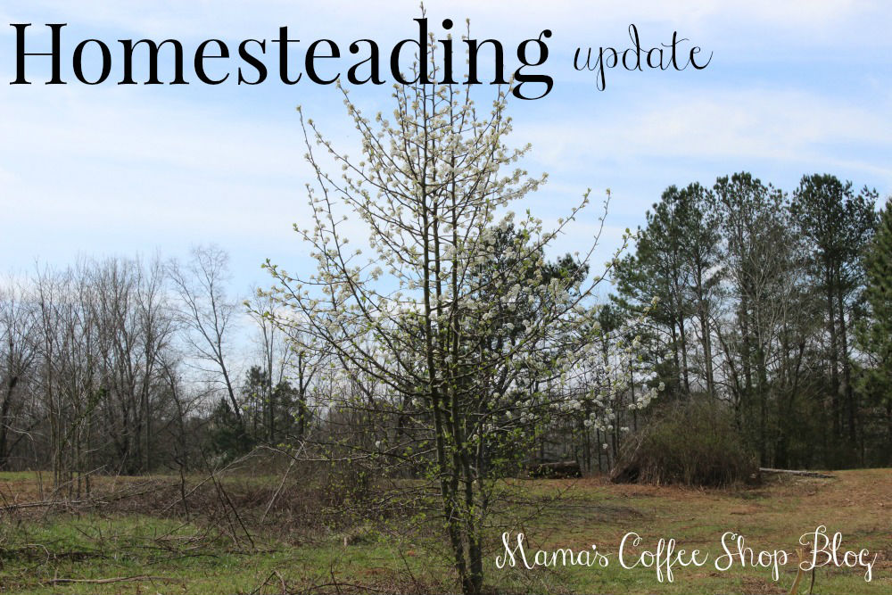 Mama's Coffee Shop Blog - HomesteadingUpdate-Image1