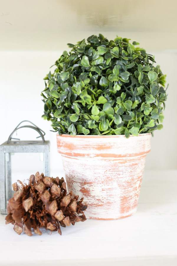 topiary ball in an aged terracotta pot | Mamas Dance