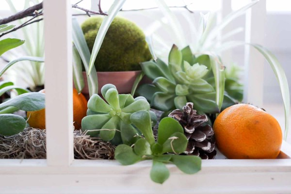 Wood Terrarium, Christmas Centre Piece | via Ashlea of This Mamas Dance #minigreenhouse #terrarium #christmas #winter #craft #centrepiece