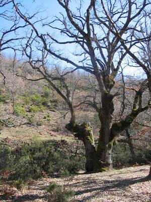 el Hayedo de Montejo de la Sierra