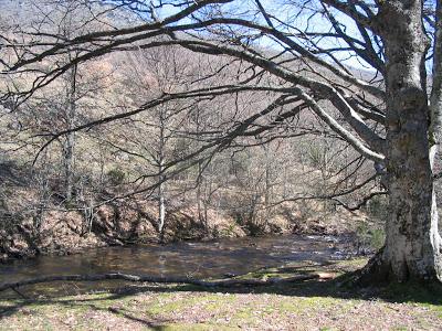otoño árboles naturaleza paseo río hayas otoño