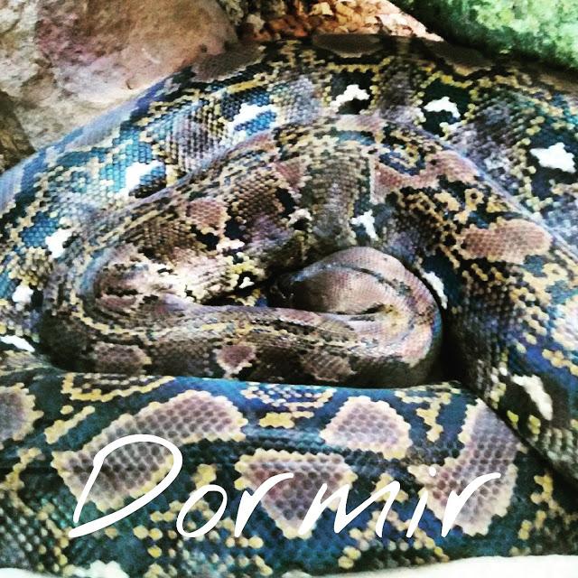 Serpientes animales salvajes aprender disfrutar