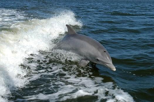fotografía delfín bebé playa
