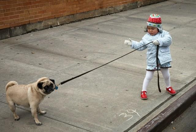 gastos caninos