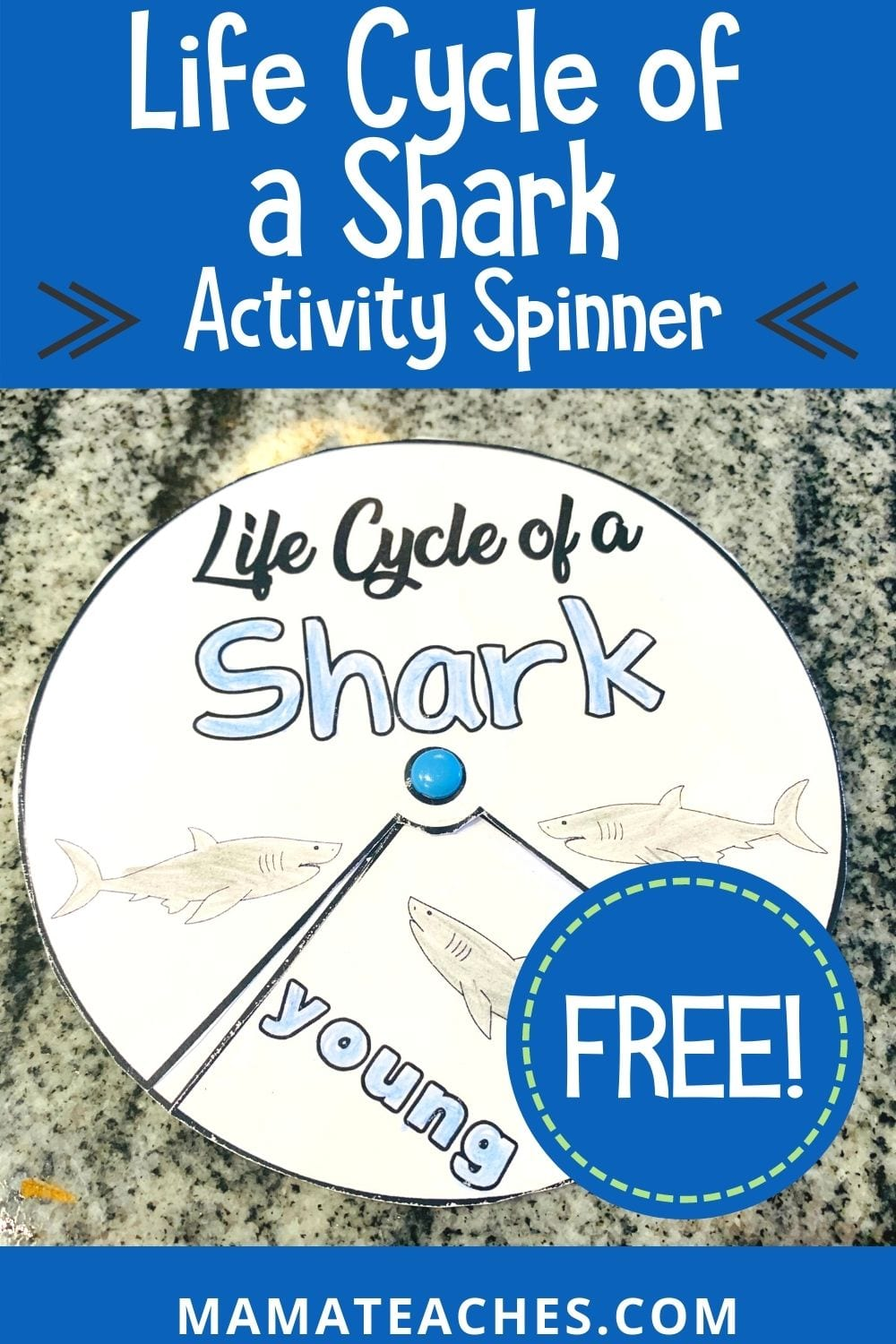 Shark Life Cycle Activity For Children Mama Teaches