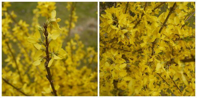 photo-fleurs-2