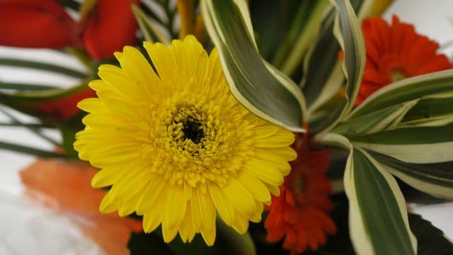 photo-fleurs-4