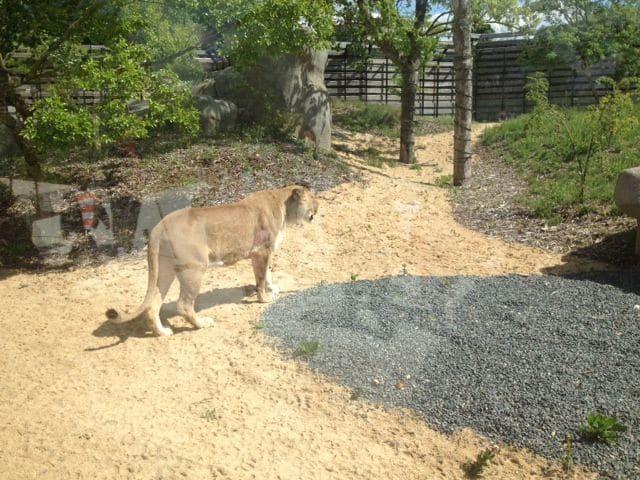 zoo-de-paris