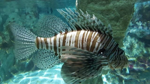 Avis aquarium Sealife 4
