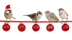 Направете тези 5 неща преди 1-ви декември