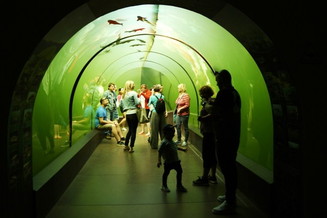 sladkovodne akvarium morava