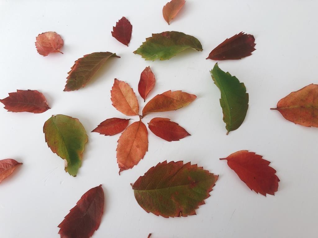 mandalas con hojas de otoño