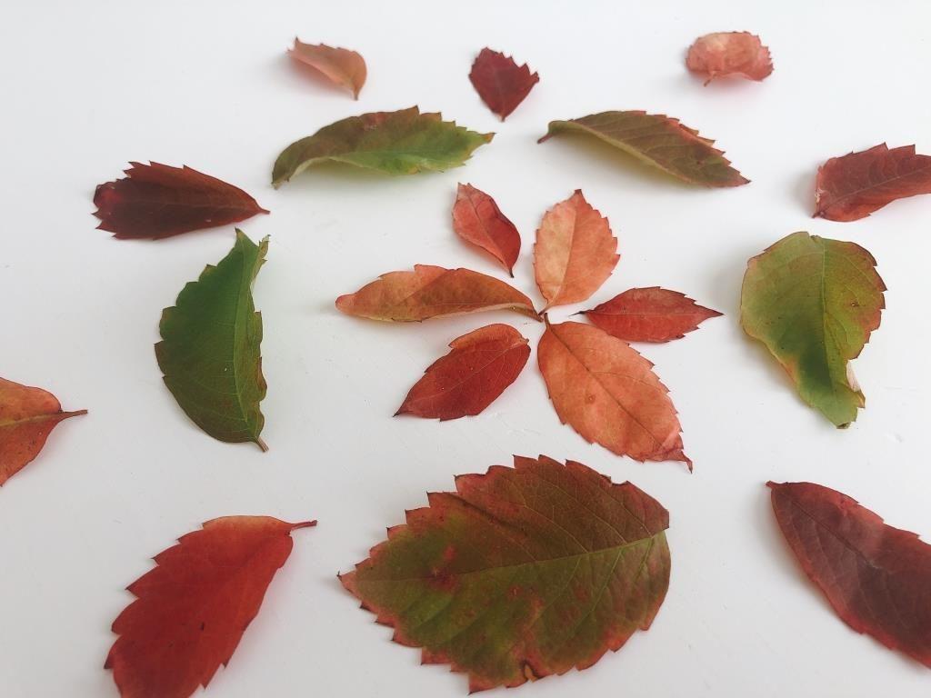 cambio de color hojas otoño para niños