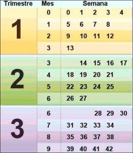 Calendario de conversión de semanas a meses en el embarazo