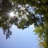 紫外線の画像