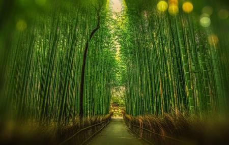 竹と笹の違いはこうやって判断しよう!【七夕】