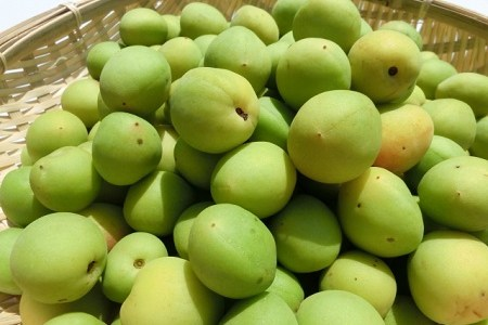 梅って果物なの?それとも野菜なの?どっち?