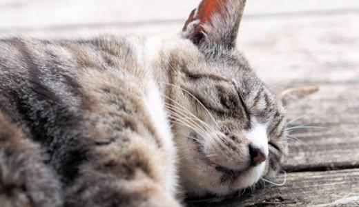 猫の夏バテ症状は嘔吐や下痢?食事などの対策は飼い主の責任!