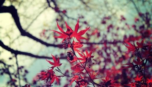 水元公園の紅葉の見ごろとアクセス情報【2018年版】