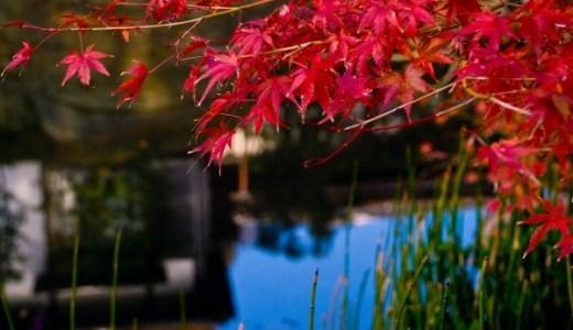 小金井公園の紅葉の見頃とライトアップ情報