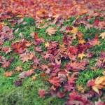 紅葉の様子