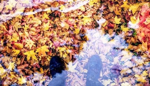 葉っぱが色づくしくみとが綺麗に赤くなる条件とは?