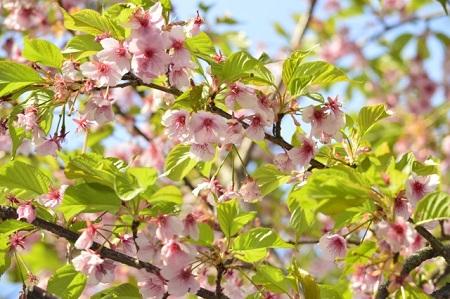 葉桜のイメージ