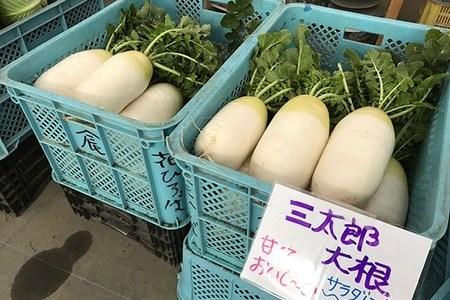 三太郎大根という品種の特徴と主な産地は?