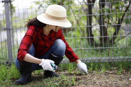 草むしりをするコツはあるの?どんな道具や服装でやればいいの?