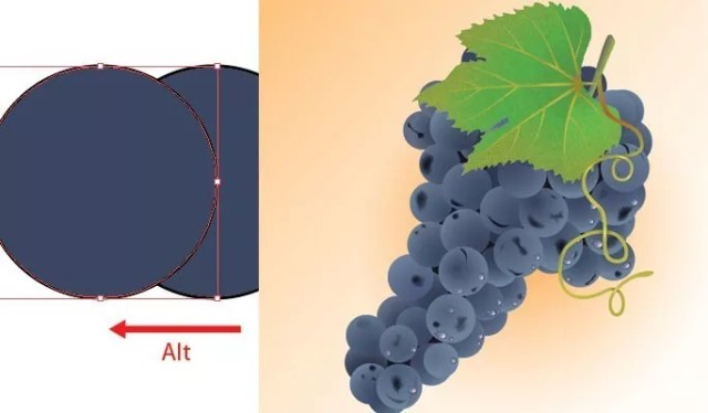 Realistic Grapes - Collection of useful illustrator tutorials