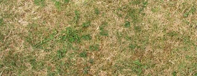 short grass - Free High Resolution Grass and Leaf Textures