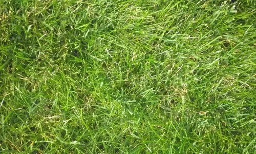 19 Grass 18 - Seamless and High Resolution Grass Textures