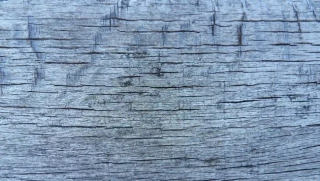wood texture 14 by carlbert d4tzgz5 e1359620226701 - 200+ Free High Quality Grungy Dirty Wood Textures