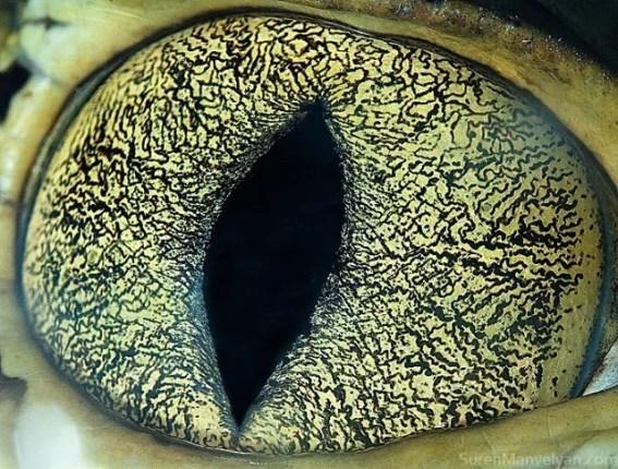 81 e1402419787559 - Macro Photography Of Animal Eyes – Suren Manvelyan