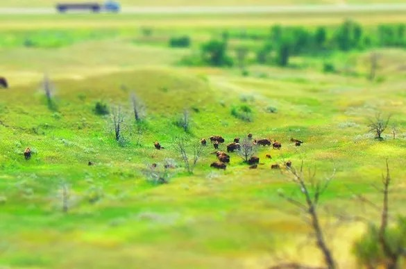 miniature bisons - 30+ Awesome Examples of Tilt-Shift Photography