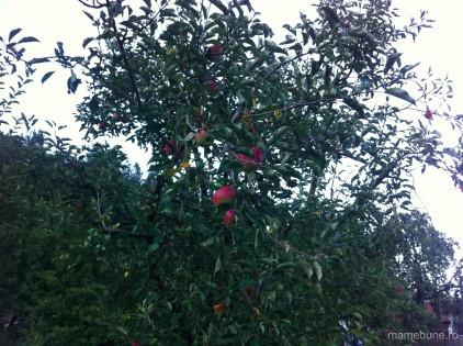 măr-cu-mere