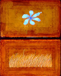 Two rectangles stacked on top of each other hold, respectively, waving wheat and a blue flower.