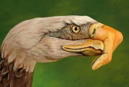 American Eagle_Guido Daniele