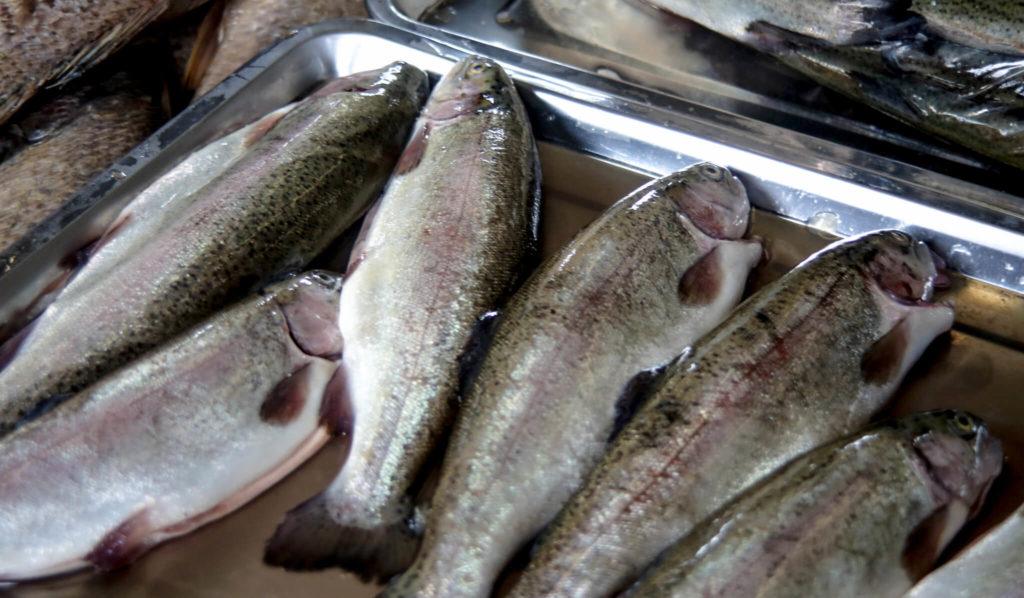 perturbateurs-endocriniens-poissons