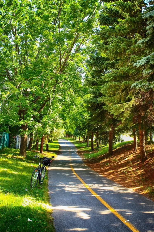 Une piste cyclable ombragée