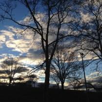 Vista a los árboles de Sunset Park, que están frente al departamento.