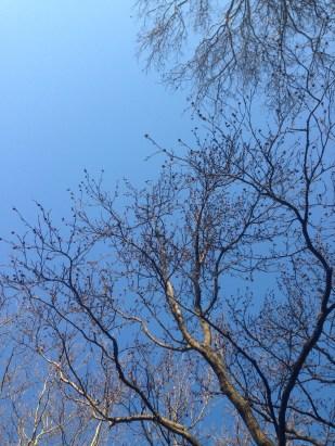 Hasta en invierno los enormes árboles de Sunset Park lucen hermosos.