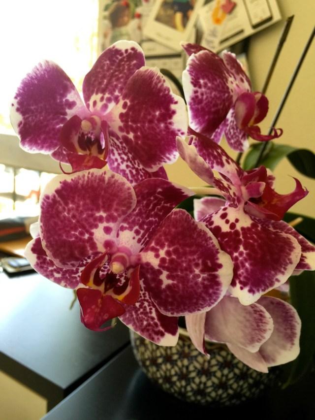 Mis orquídeas de Miami