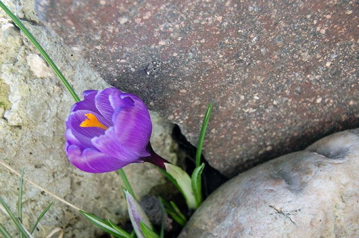 Stille im Frühling - Frühllingsfarben