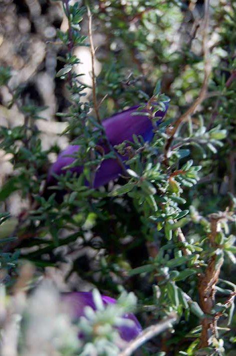 Gemüsegarten und Kräuterbeet: Inspiration Frühling - Frühlingsfarben -Gemüsegarten und Kräuterbeet