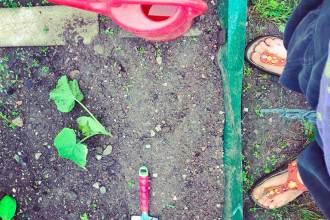 Gemüsegarten und Kräuterbeet